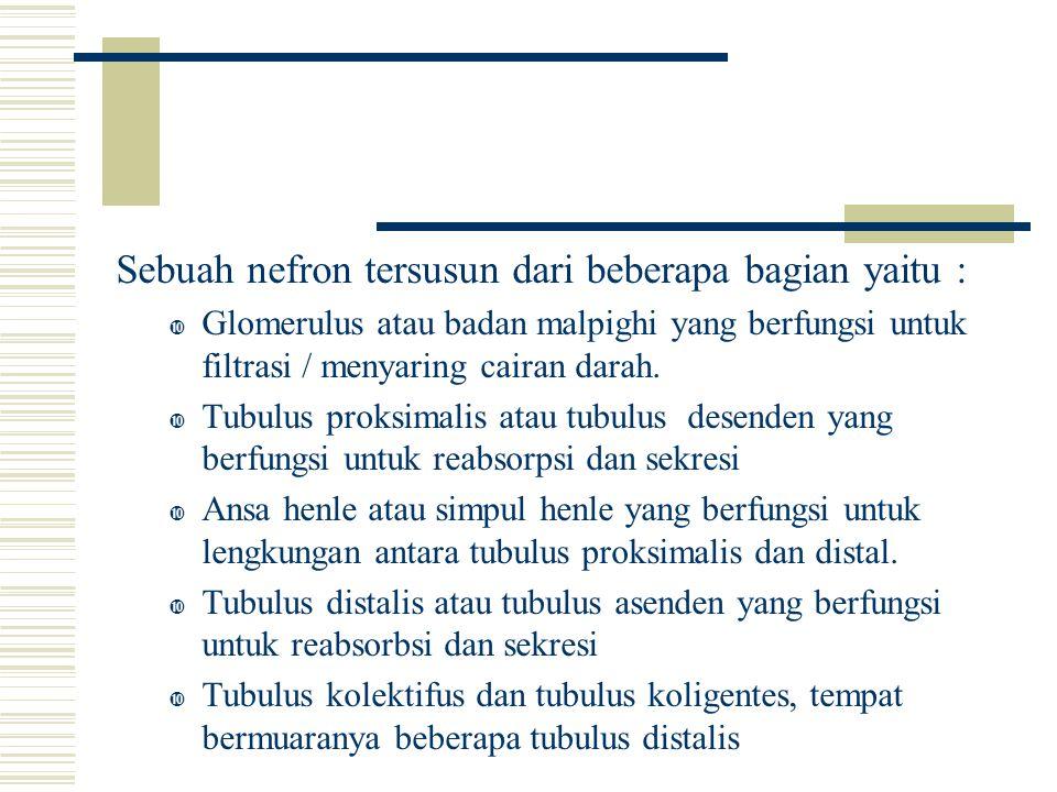 Sebuah nefron tersusun dari beberapa bagian yaitu :