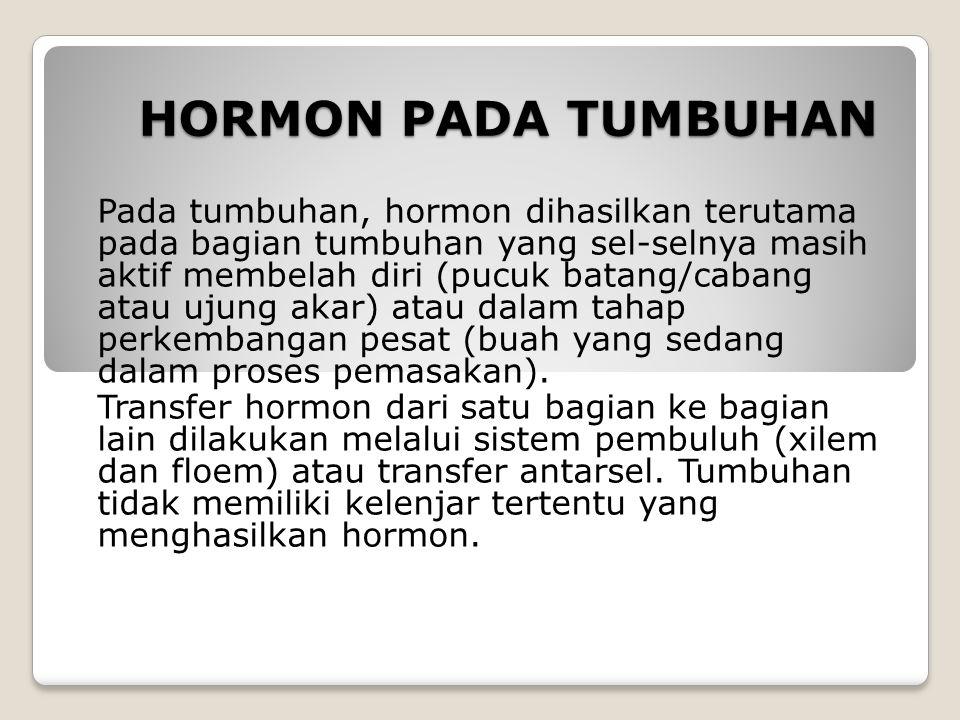 HORMON PADA TUMBUHAN