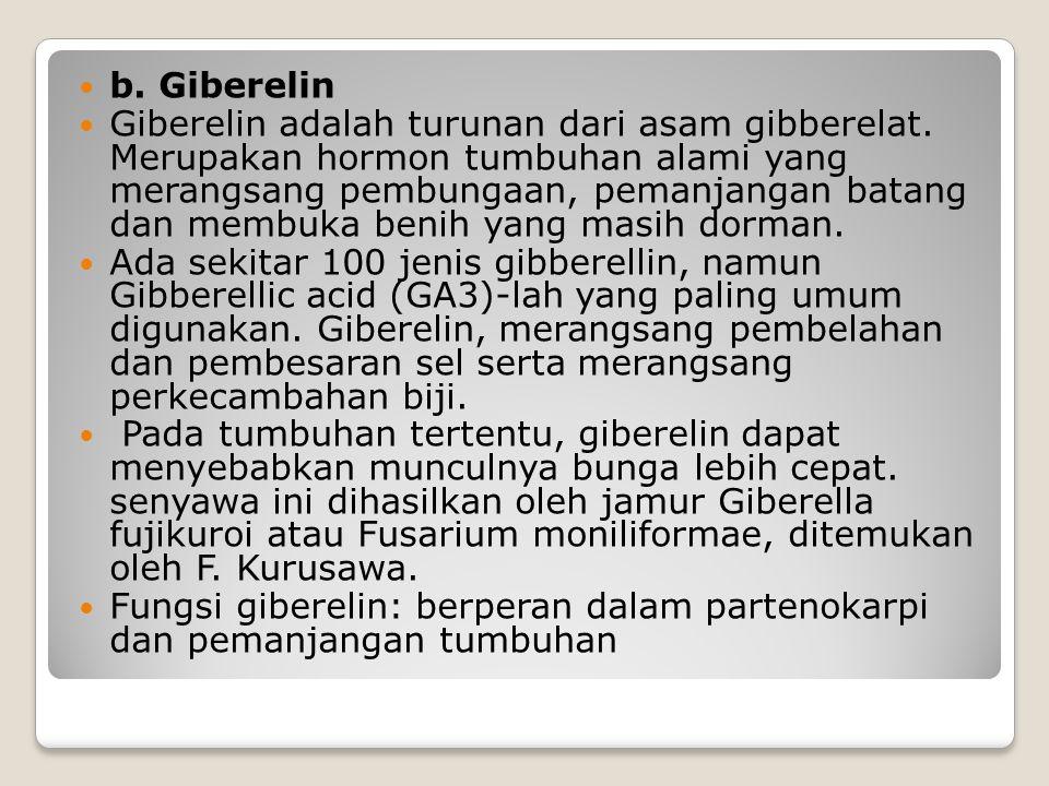 b. Giberelin