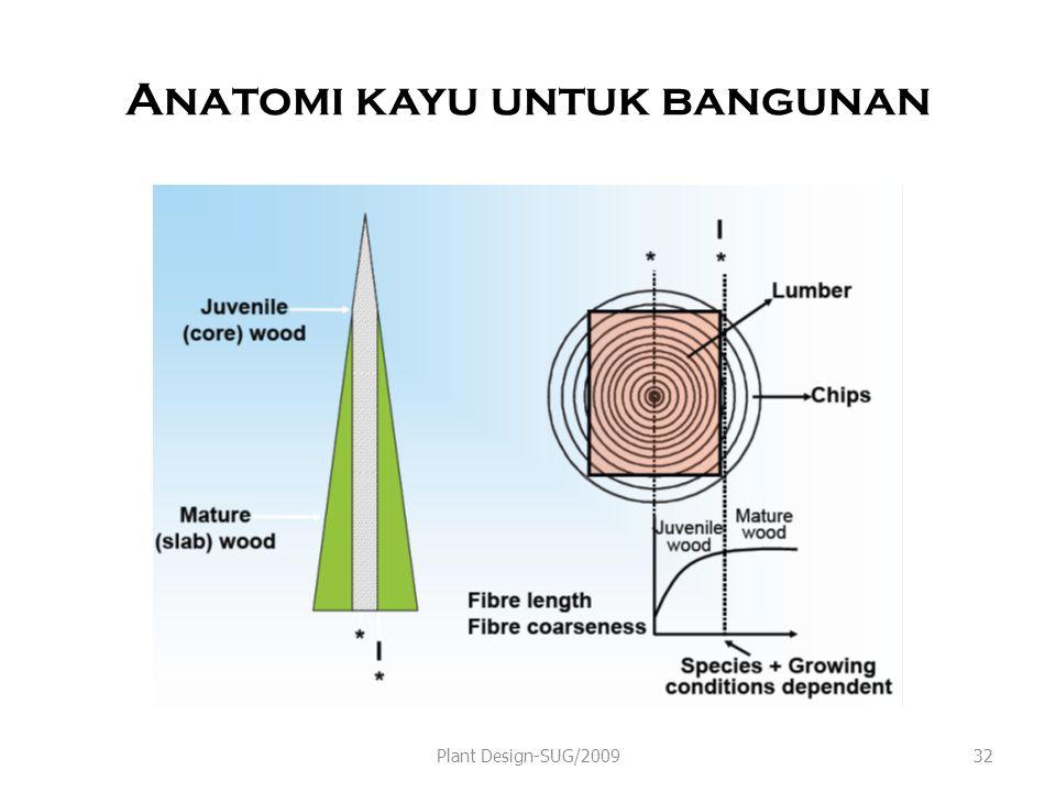 Anatomi kayu untuk bangunan