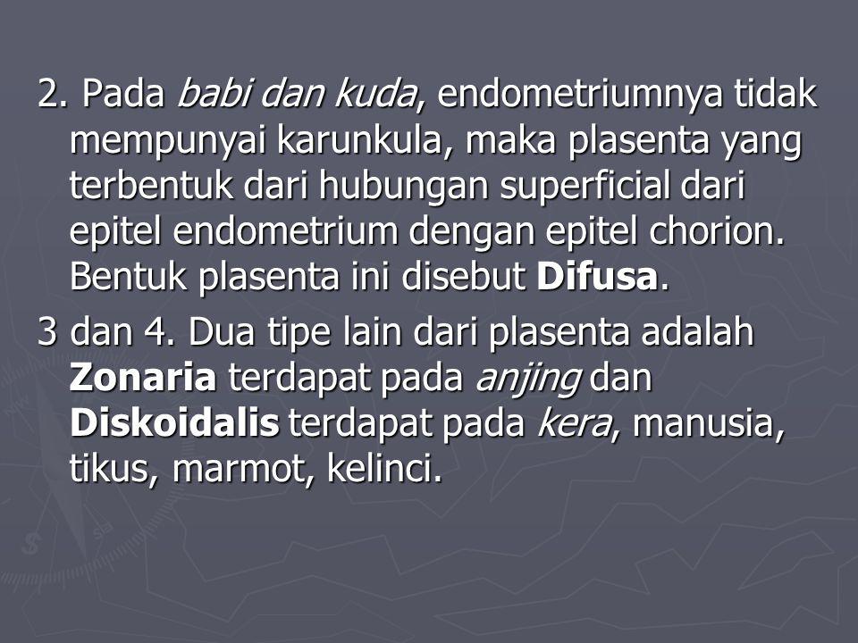 2. Pada babi dan kuda, endometriumnya tidak mempunyai karunkula, maka plasenta yang terbentuk dari hubungan superficial dari epitel endometrium dengan epitel chorion. Bentuk plasenta ini disebut Difusa.