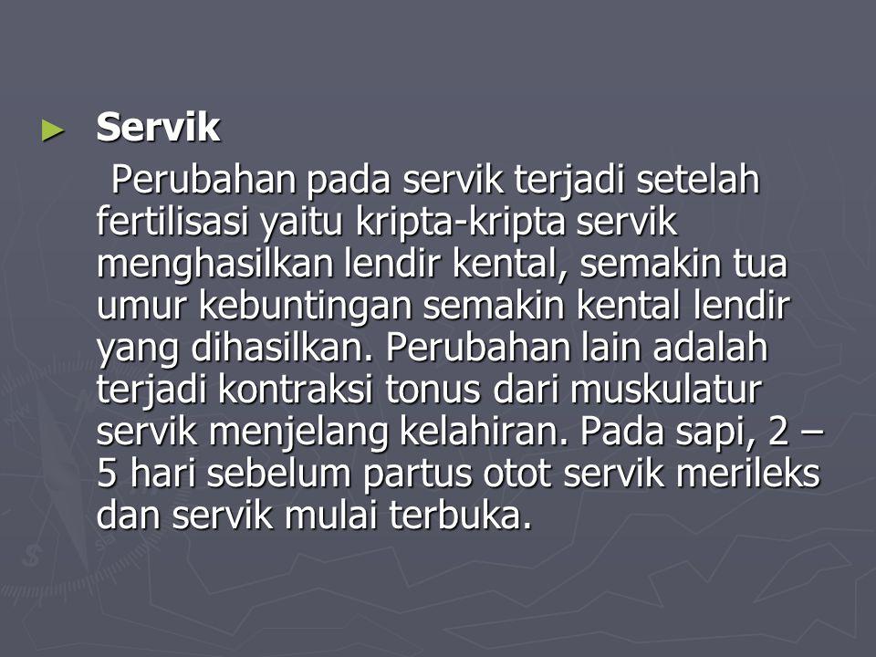 Servik