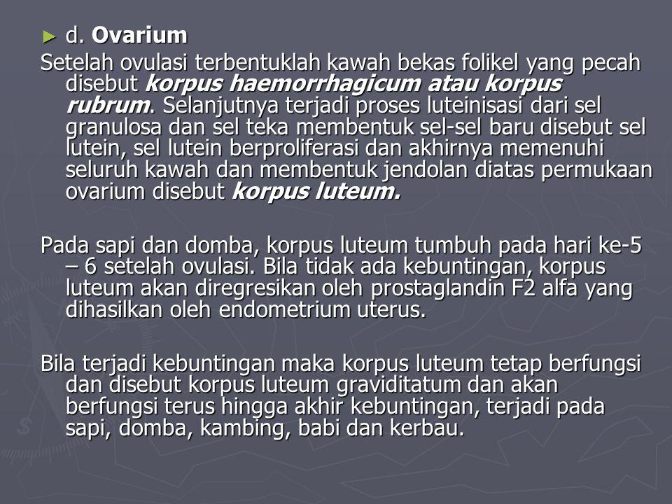 d. Ovarium