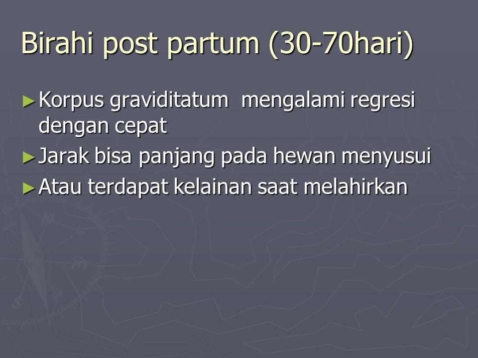 Birahi post partum (30-70hari)