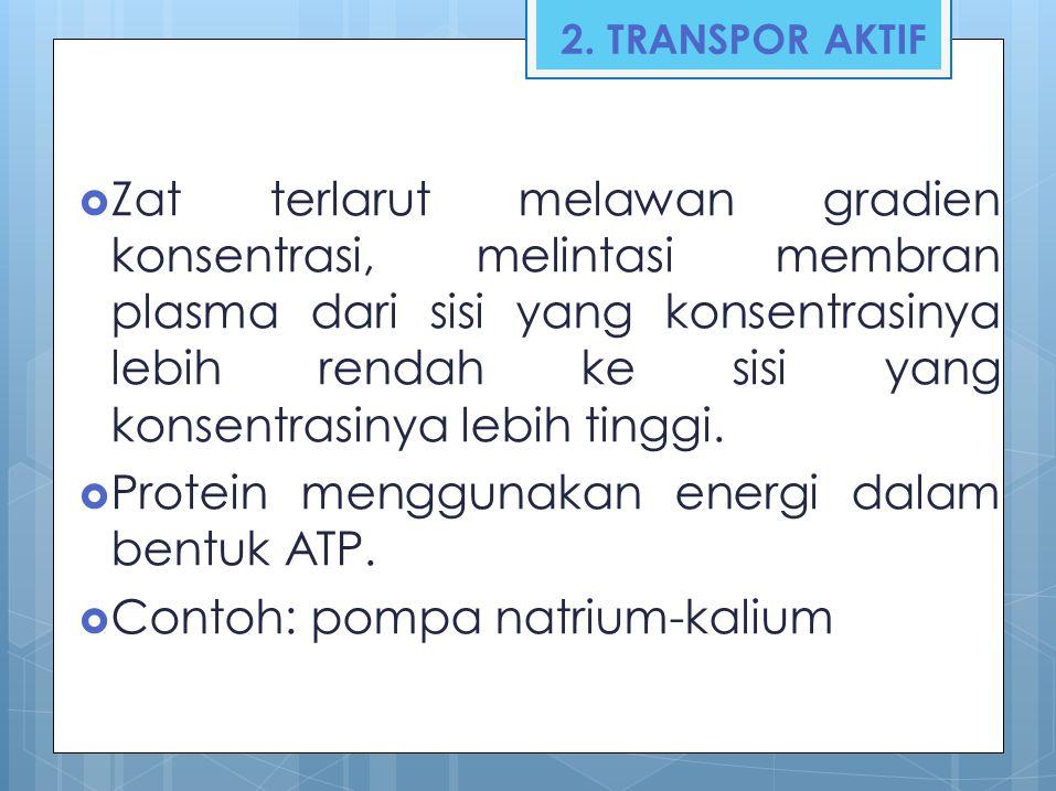 Protein menggunakan energi dalam bentuk ATP.