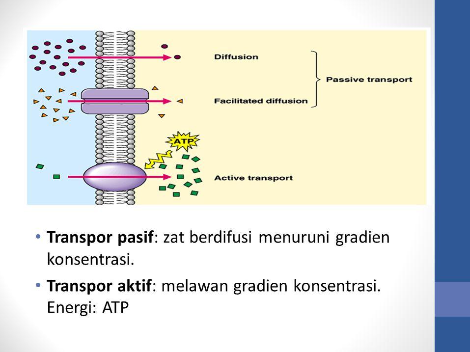 Transpor pasif: zat berdifusi menuruni gradien konsentrasi.