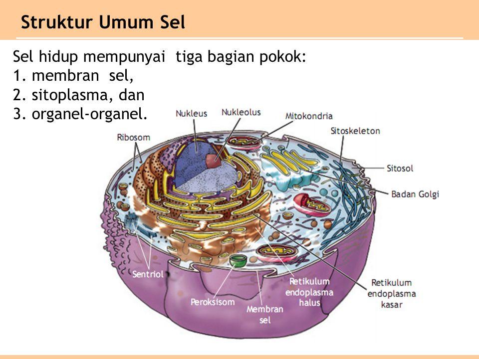 Struktur Umum Sel Sel hidup mempunyai tiga bagian pokok: