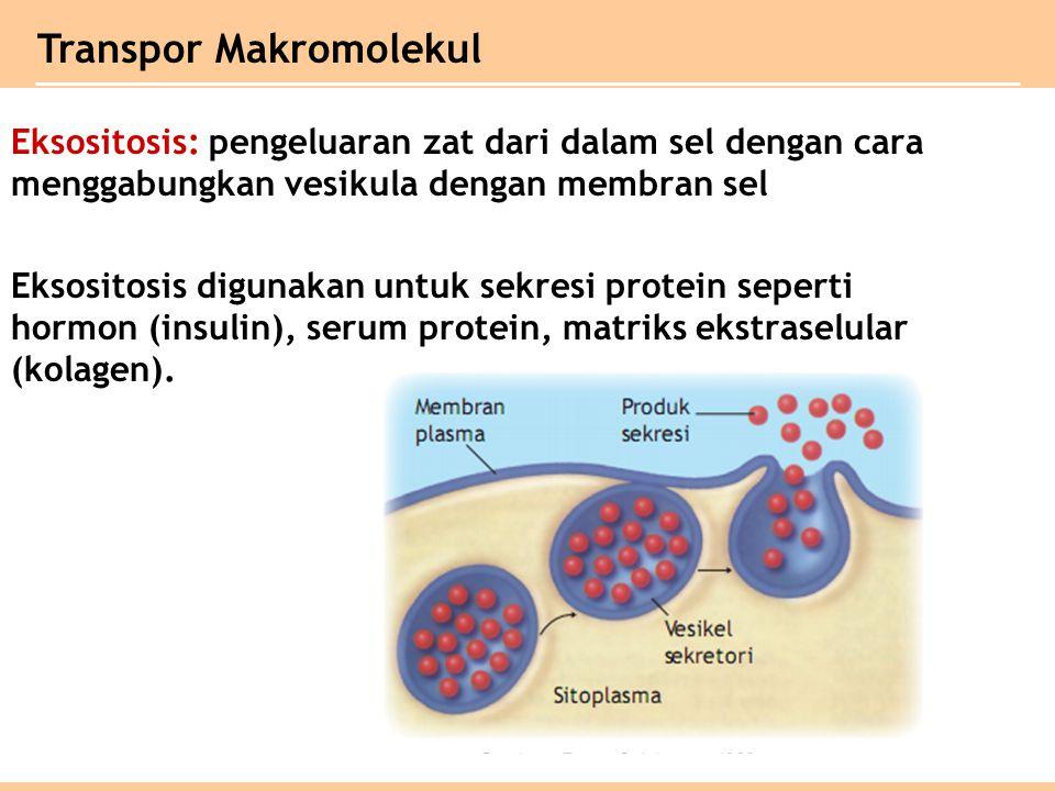 Transpor Makromolekul