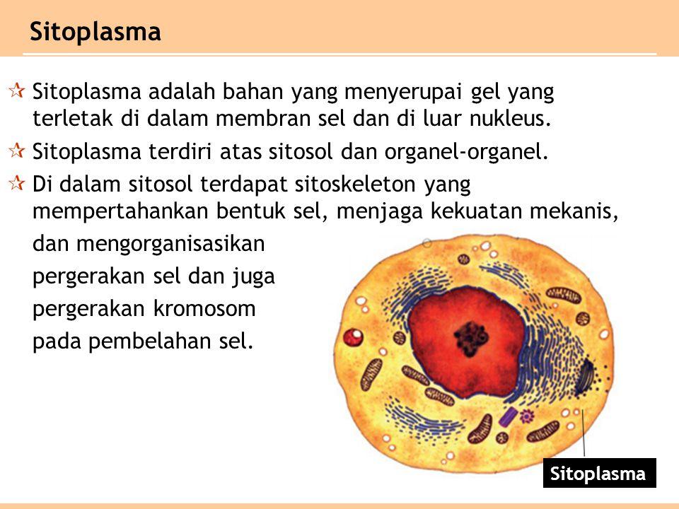 Sitoplasma Sitoplasma adalah bahan yang menyerupai gel yang terletak di dalam membran sel dan di luar nukleus.
