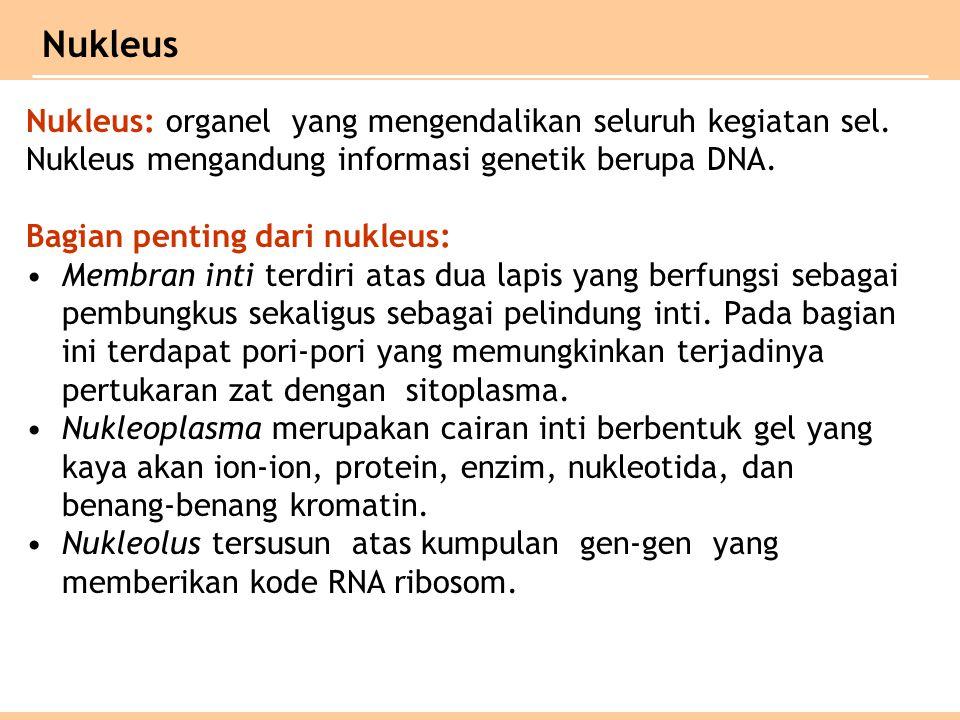 Nukleus Nukleus: organel yang mengendalikan seluruh kegiatan sel.