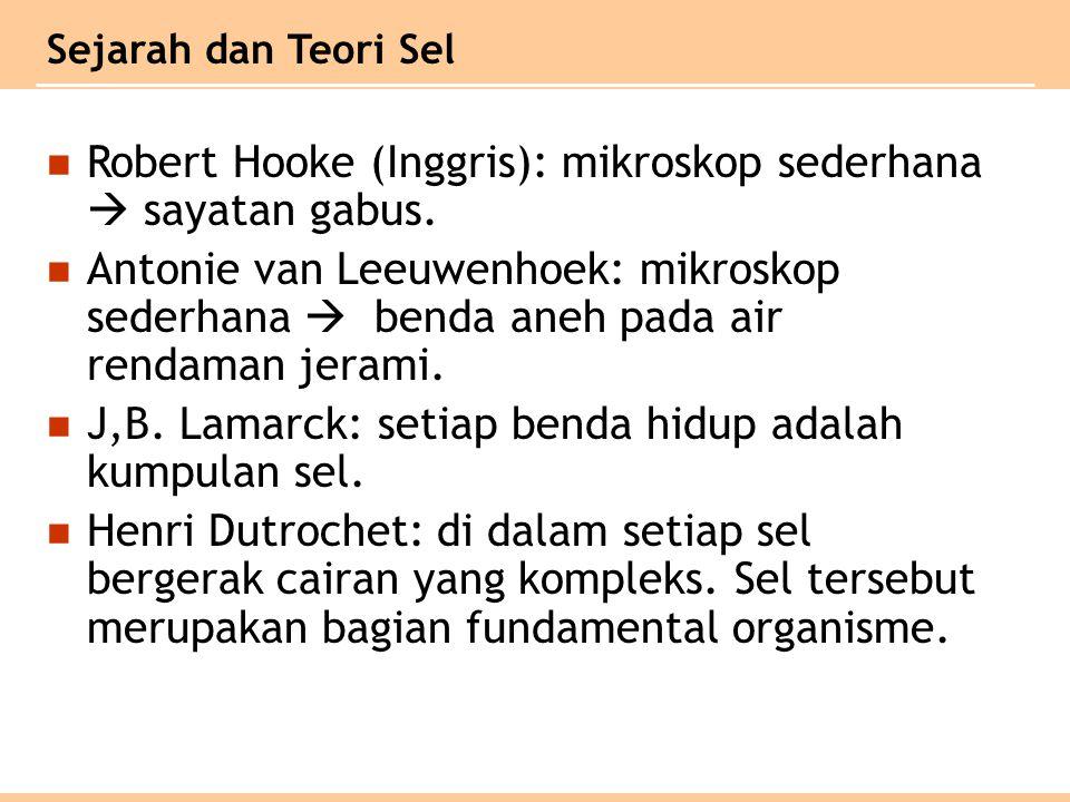 Robert Hooke (Inggris): mikroskop sederhana  sayatan gabus.