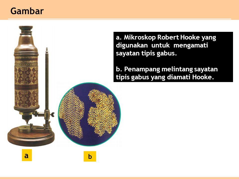 Gambar a. Mikroskop Robert Hooke yang digunakan untuk mengamati sayatan tipis gabus. b. Penampang melintang sayatan.