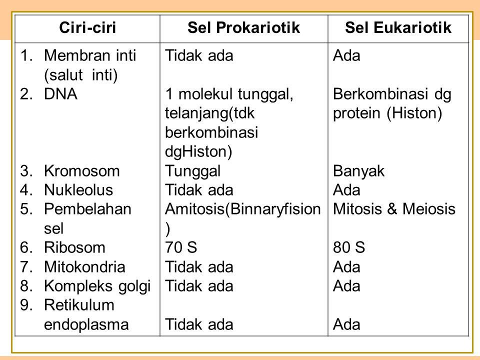 Ciri-ciri Sel Prokariotik. Sel Eukariotik. Membran inti (salut inti) DNA ddd d.