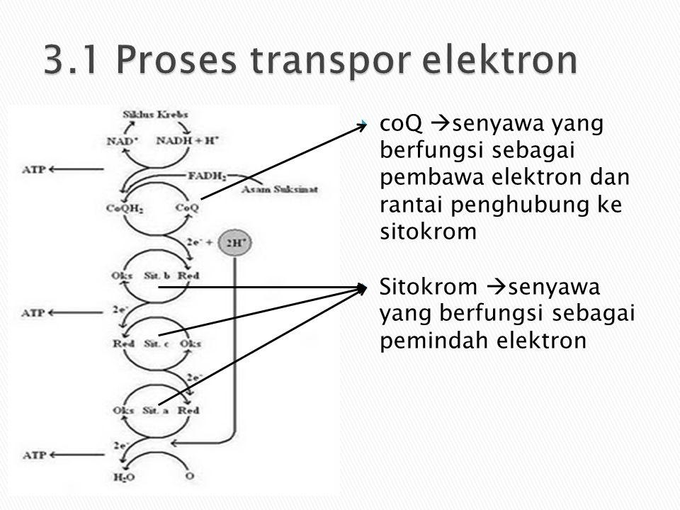 3.1 Proses transpor elektron