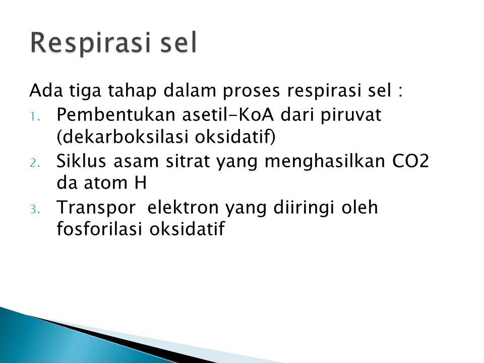 Respirasi sel Ada tiga tahap dalam proses respirasi sel :