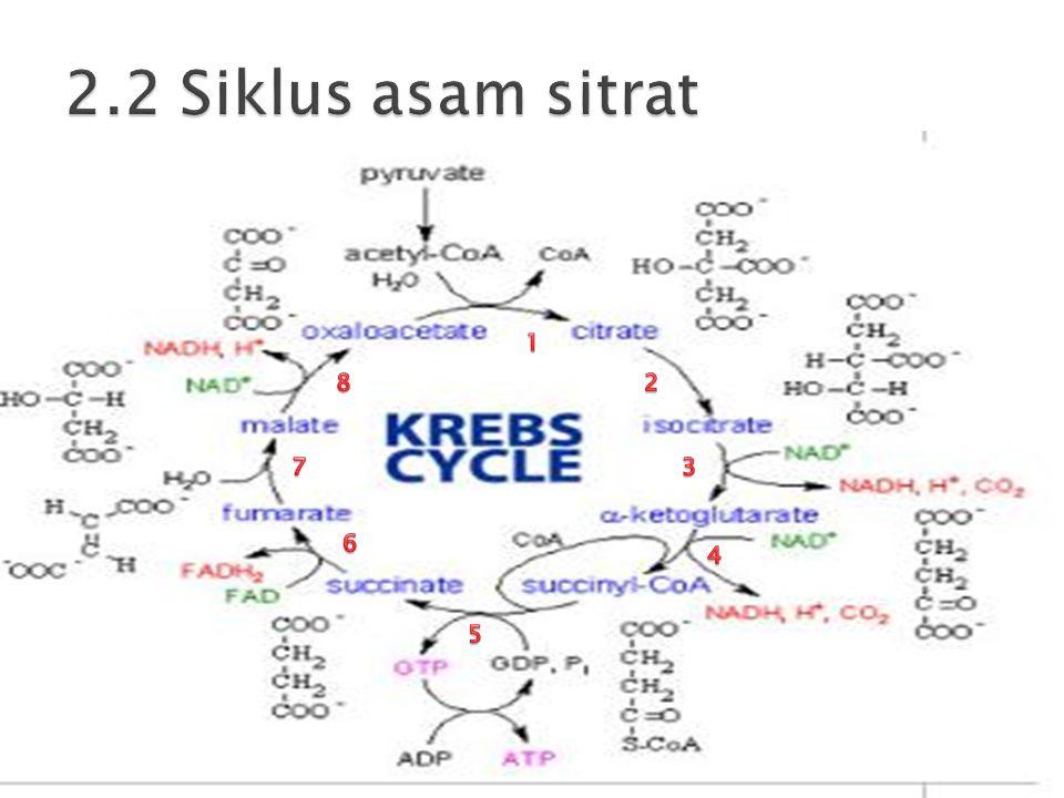 2.2 Siklus asam sitrat 1 8 2 7 3 6 4 5