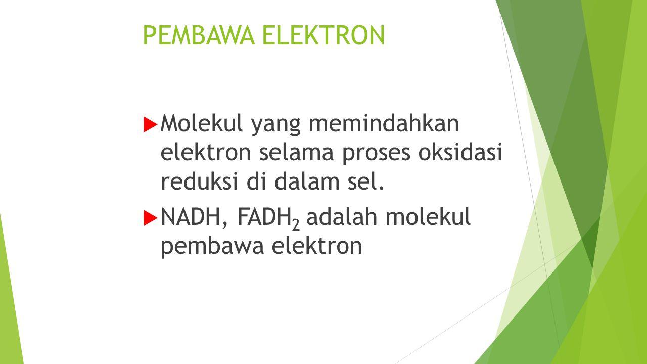 PEMBAWA ELEKTRON Molekul yang memindahkan elektron selama proses oksidasi reduksi di dalam sel.