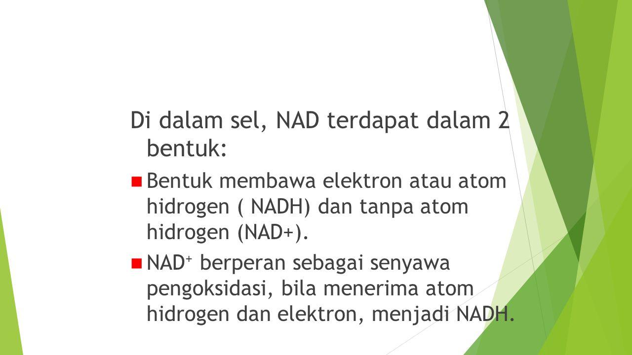 NAD (Nikotinamida Dinukleotida)