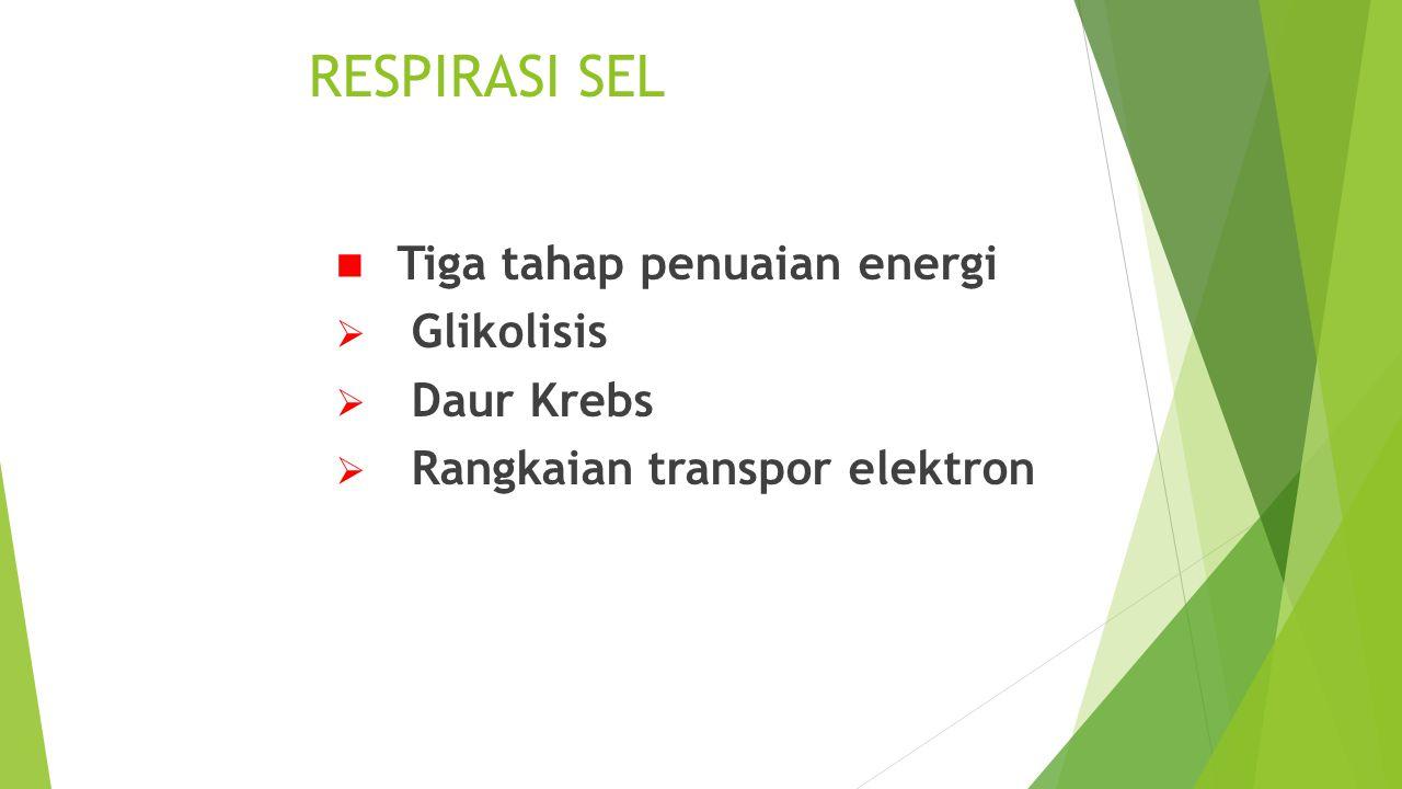 RESPIRASI SEL Tiga tahap penuaian energi Glikolisis Daur Krebs