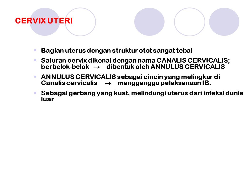 CERVIX UTERI Bagian uterus dengan struktur otot sangat tebal
