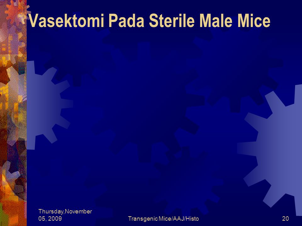 Vasektomi Pada Sterile Male Mice