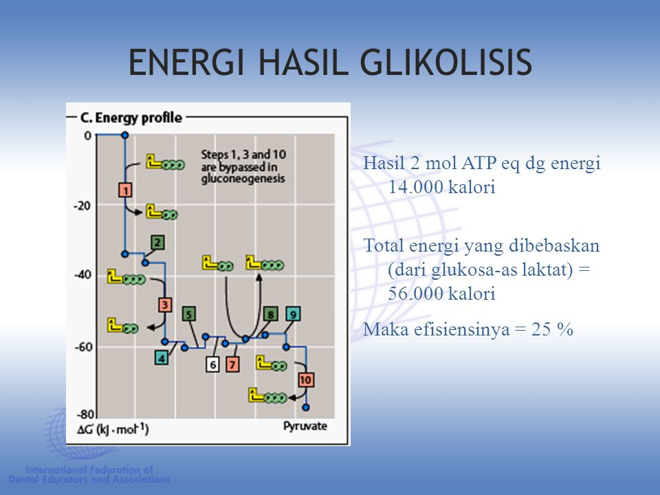 ENERGI HASIL GLIKOLISIS