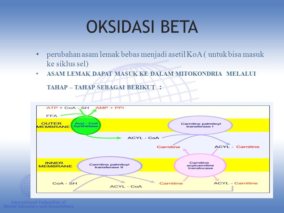 OKSIDASI BETA perubahan asam lemak bebas menjadi asetil KoA ( untuk bisa masuk ke siklus sel)
