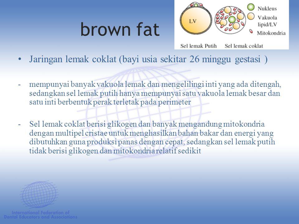 brown fat Jaringan lemak coklat (bayi usia sekitar 26 minggu gestasi )