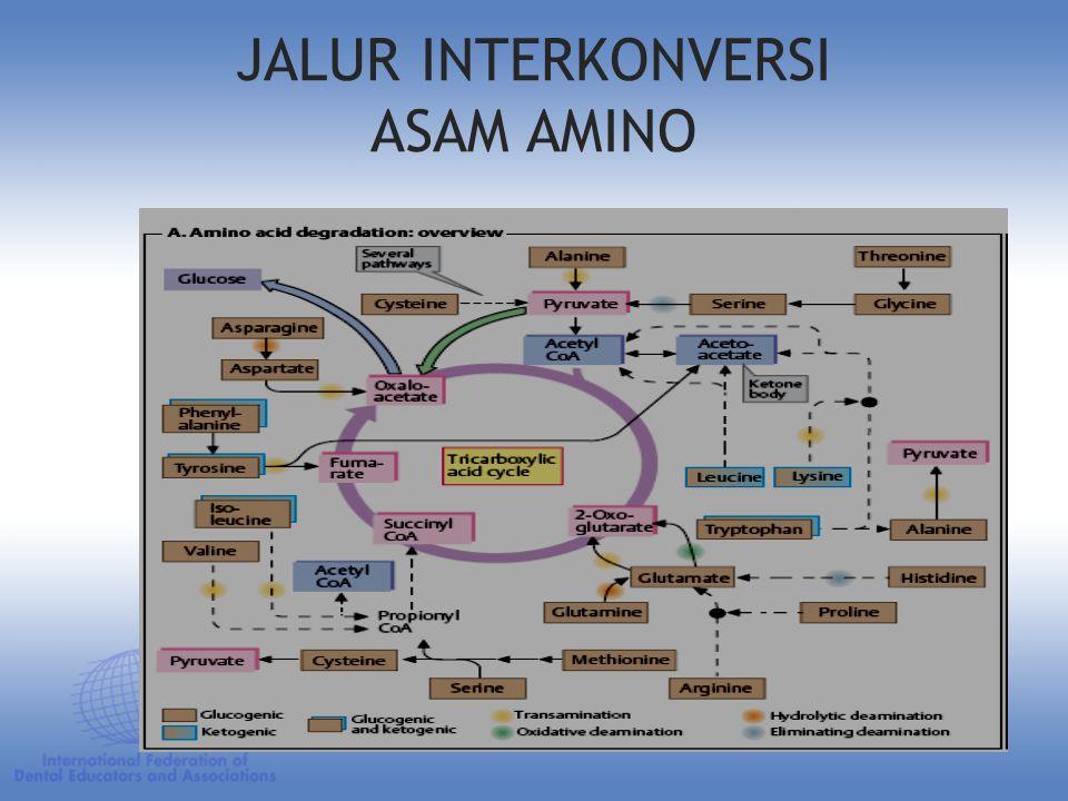 JALUR INTERKONVERSI ASAM AMINO