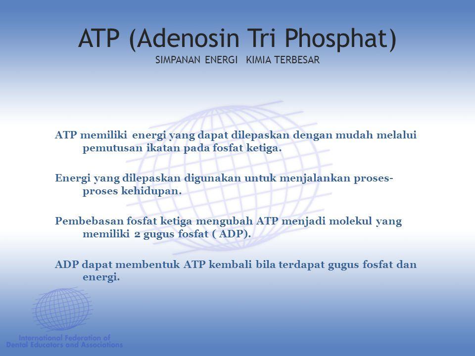 ATP (Adenosin Tri Phosphat) SIMPANAN ENERGI KIMIA TERBESAR