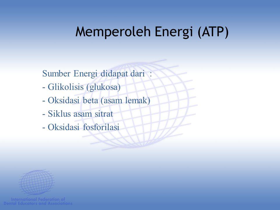 Memperoleh Energi (ATP)