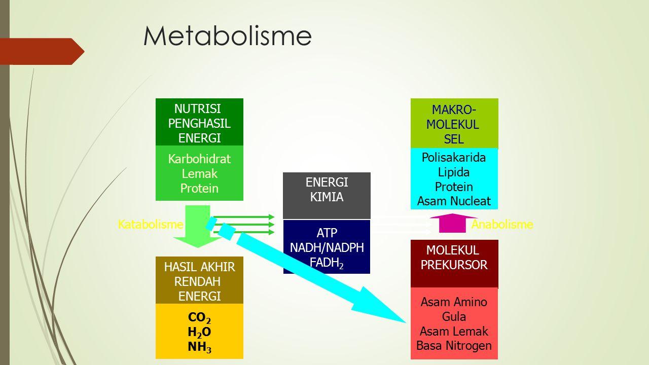 Metabolisme NUTRISI PENGHASIL ENERGI Karbohidrat Lemak Protein MAKRO-