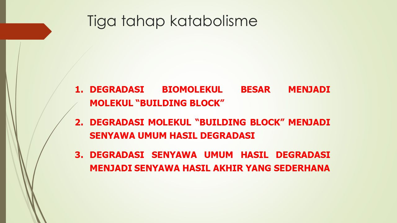 Tiga tahap katabolisme