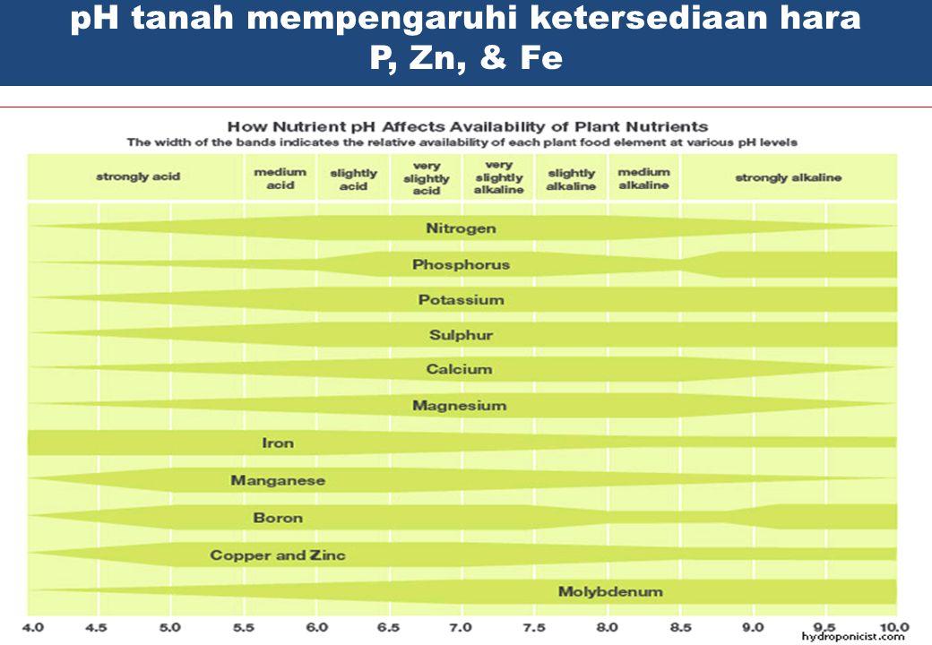 pH tanah mempengaruhi ketersediaan hara