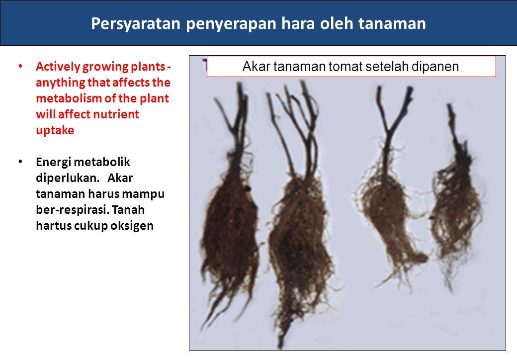 Persyaratan penyerapan hara oleh tanaman