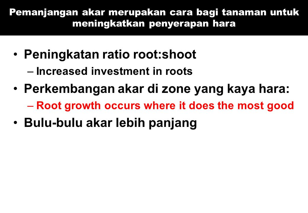 Peningkatan ratio root:shoot Perkembangan akar di zone yang kaya hara: