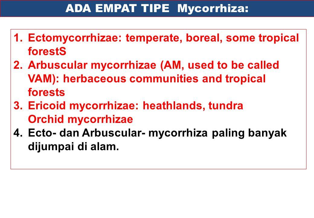 ADA EMPAT TIPE Mycorrhiza: