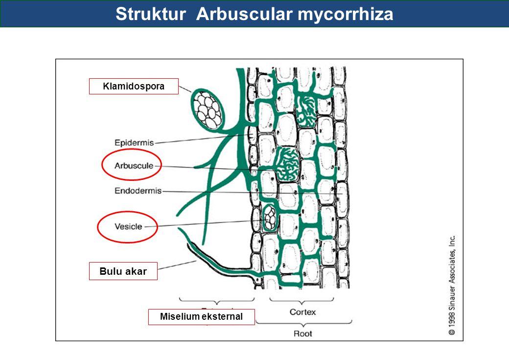 Struktur Arbuscular mycorrhiza