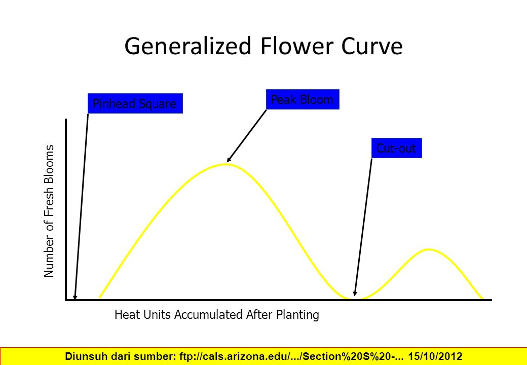 Generalized Flower Curve