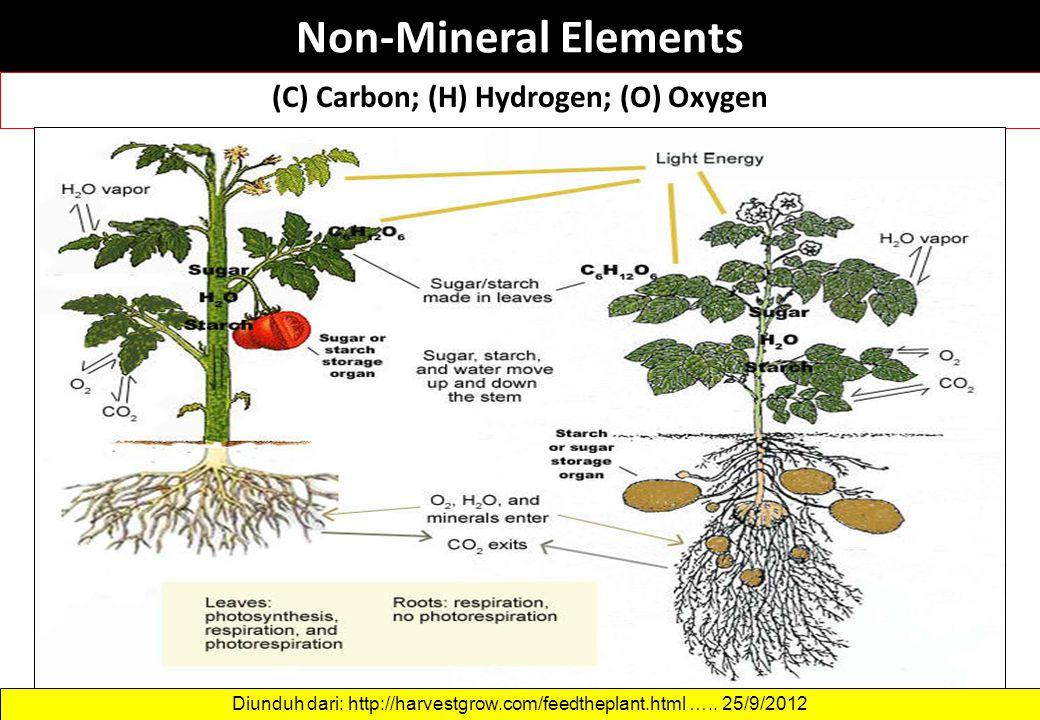 (C) Carbon; (H) Hydrogen; (O) Oxygen