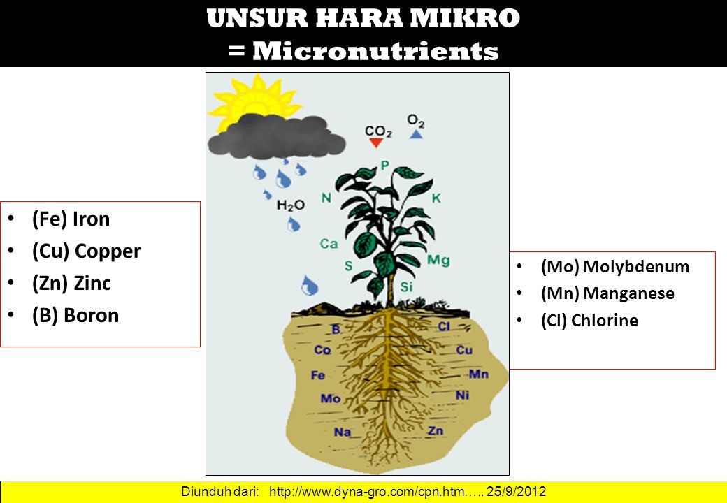 UNSUR HARA MIKRO = Micronutrients
