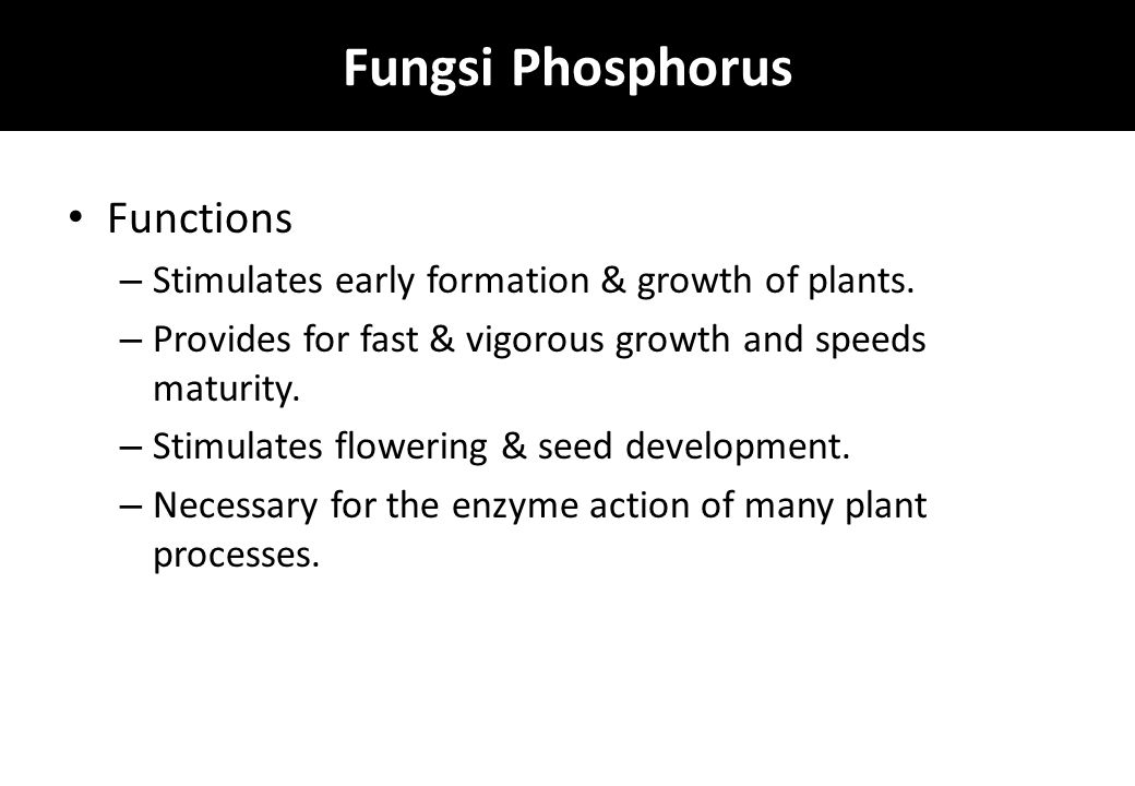 Fungsi Phosphorus Functions