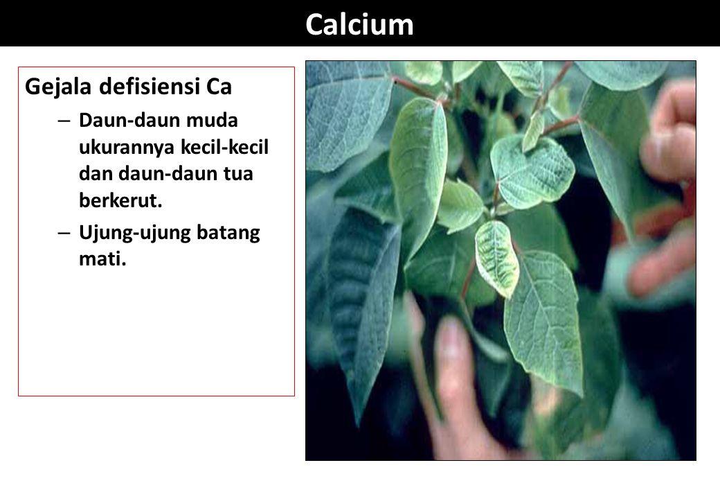 Calcium Gejala defisiensi Ca