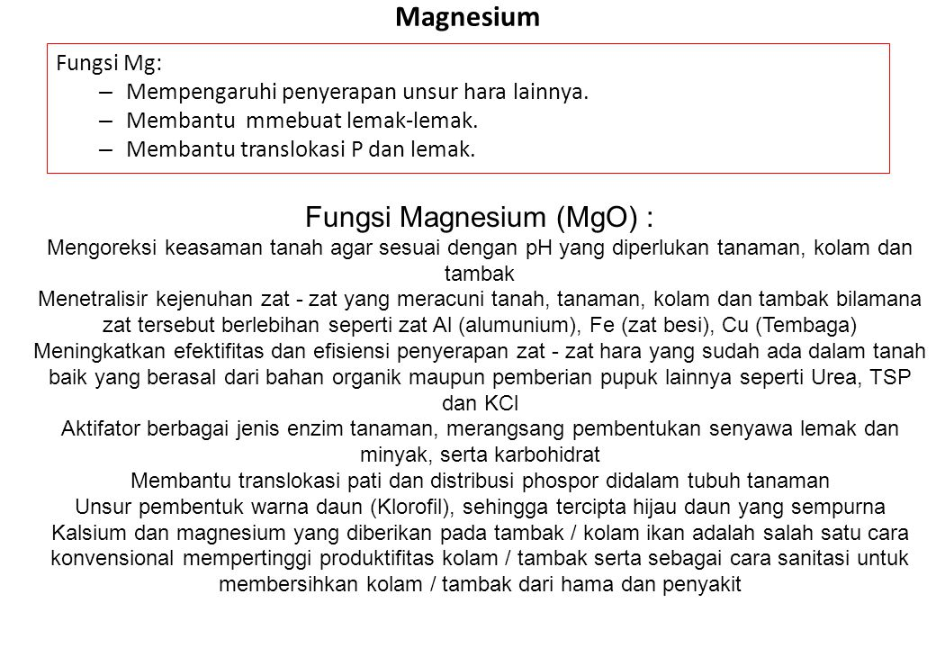 Magnesium Fungsi Magnesium (MgO) : Fungsi Mg:
