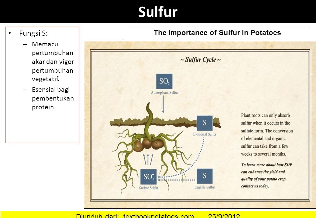 The Importance of Sulfur in Potatoes