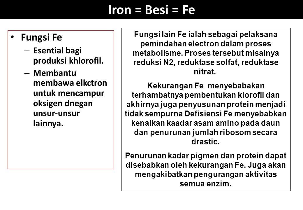 Iron = Besi = Fe Fungsi Fe Esential bagi produksi khlorofil.