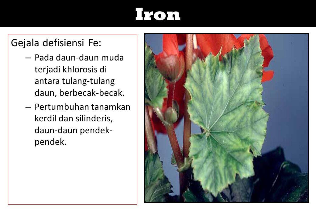Iron Gejala defisiensi Fe: