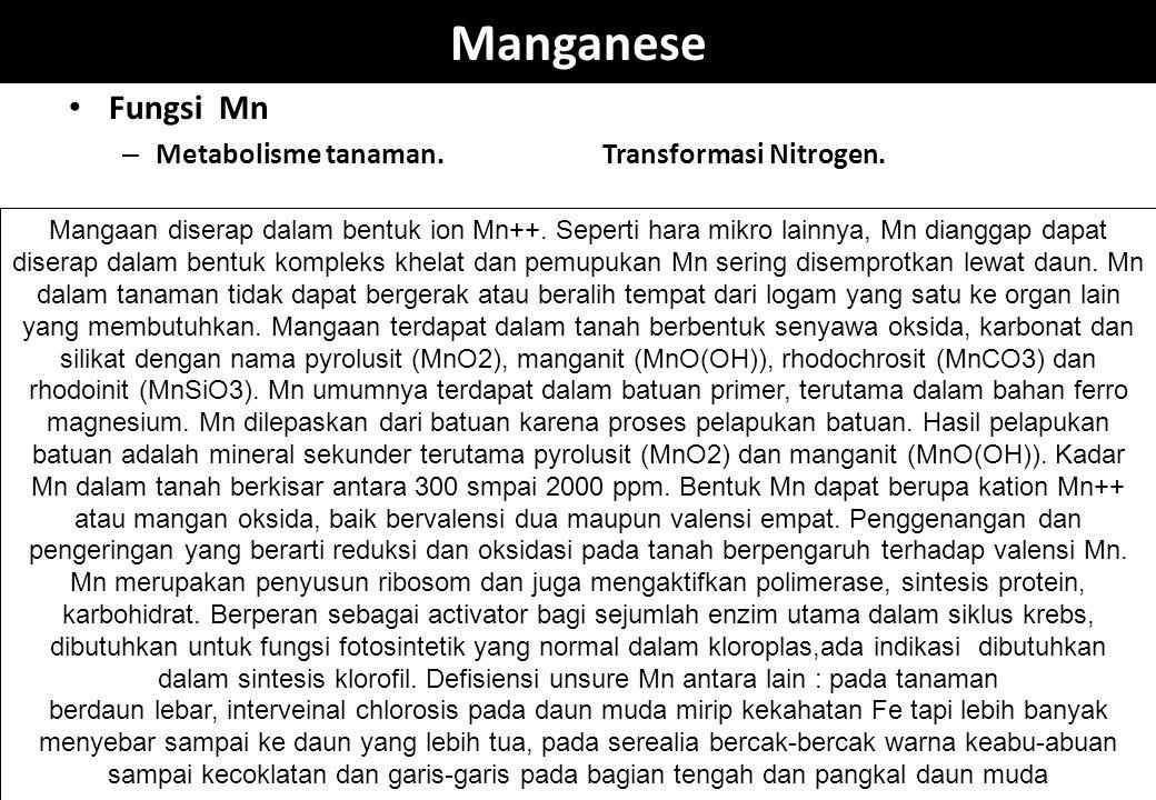 Manganese Fungsi Mn Metabolisme tanaman. Transformasi Nitrogen.