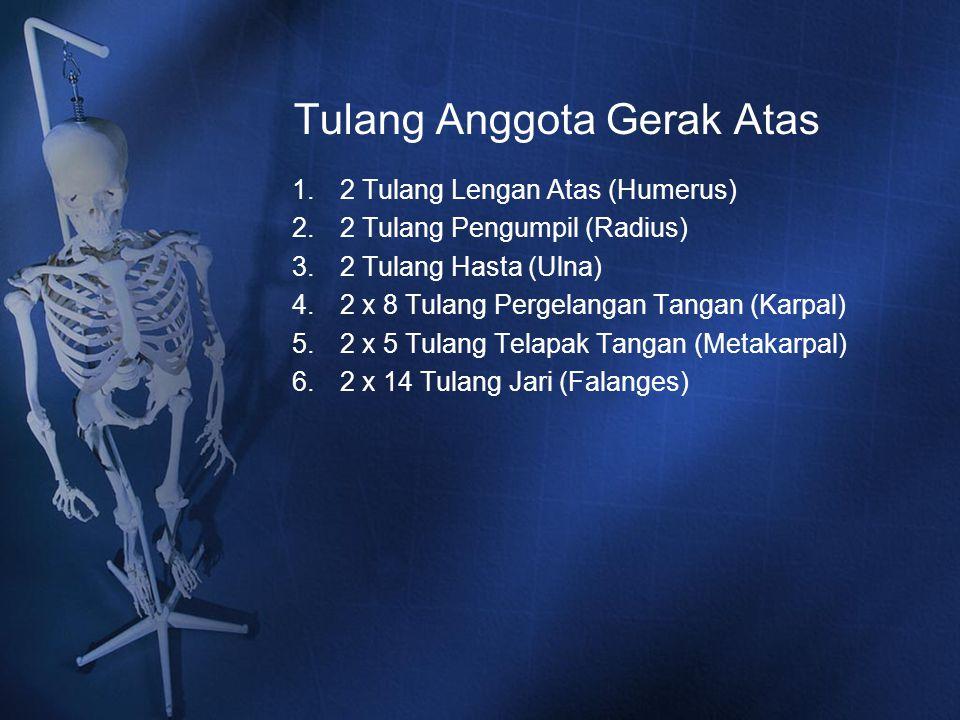 Tulang Anggota Gerak Atas