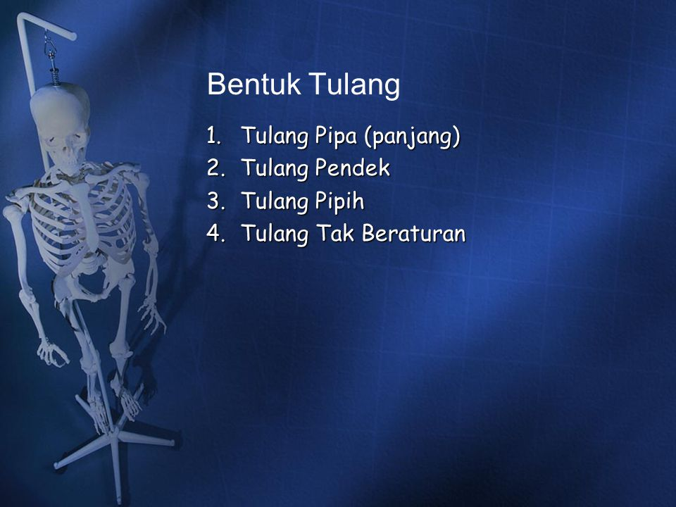 Bentuk Tulang Tulang Pipa (panjang) Tulang Pendek Tulang Pipih